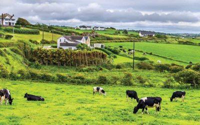Farm Taxation Relief & Capital Allowances